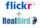 Flickr_realbird